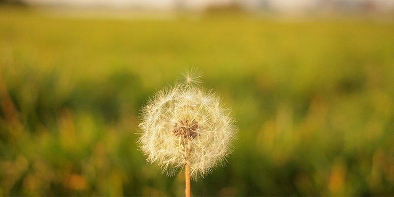 Das Problem mit den Wünschen